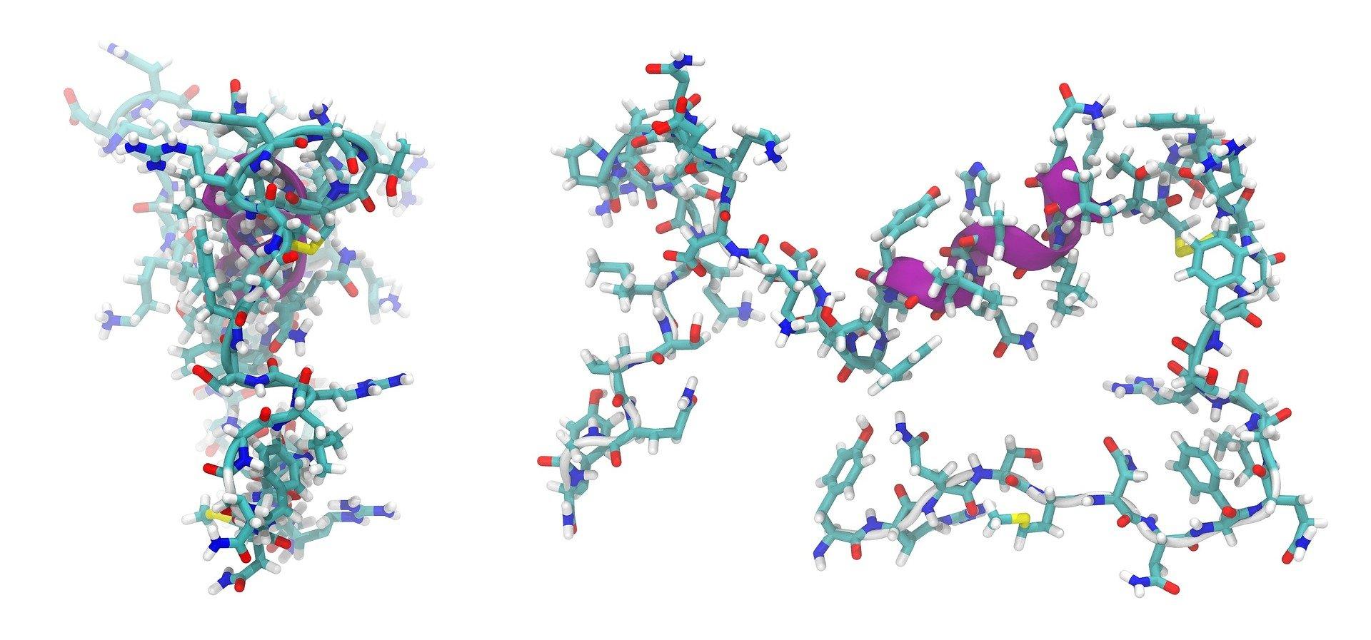 1 peptide