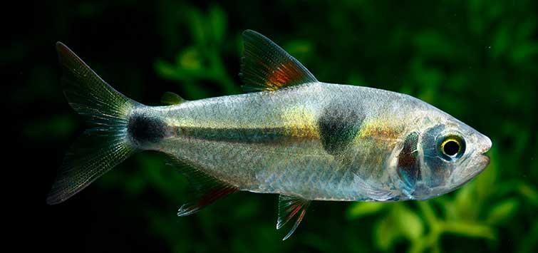 TEMPTATION FOR FISH