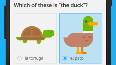 Duolingo best language learning apps for android